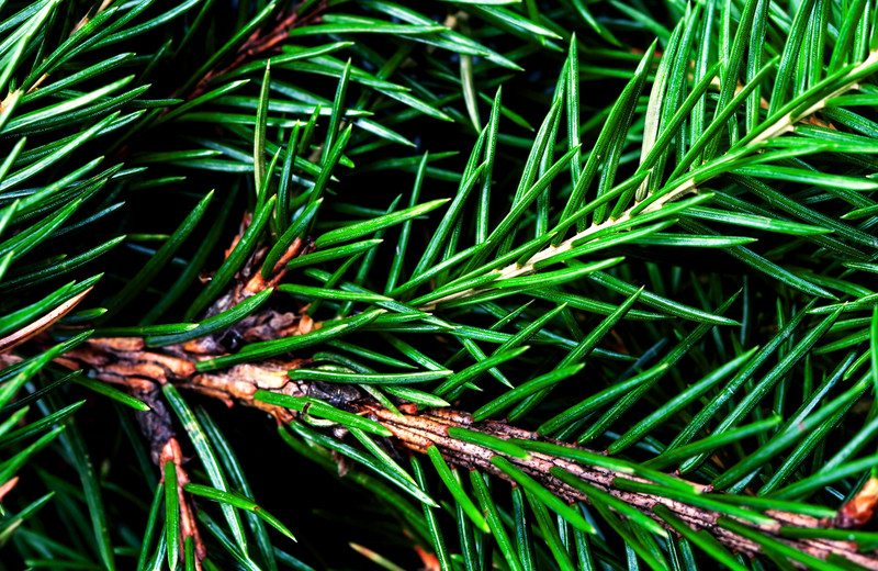 Recycled Christmas Trees Needles
