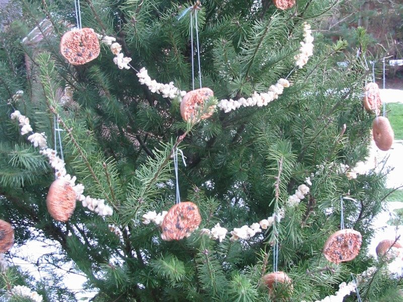 Roedells Landscaping Christmas Tree