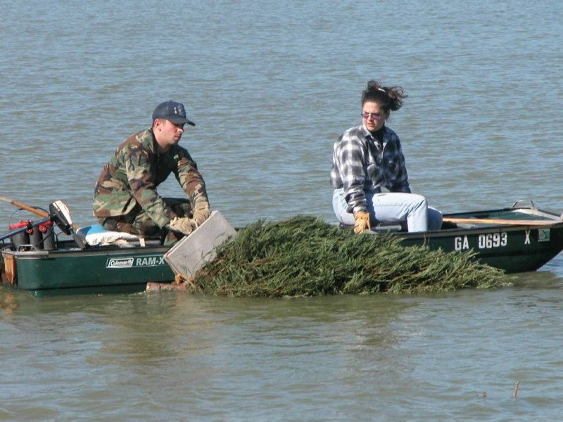 Recycle Christmas trees in water
