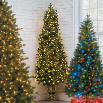 Decorate outdoor Christmas tress