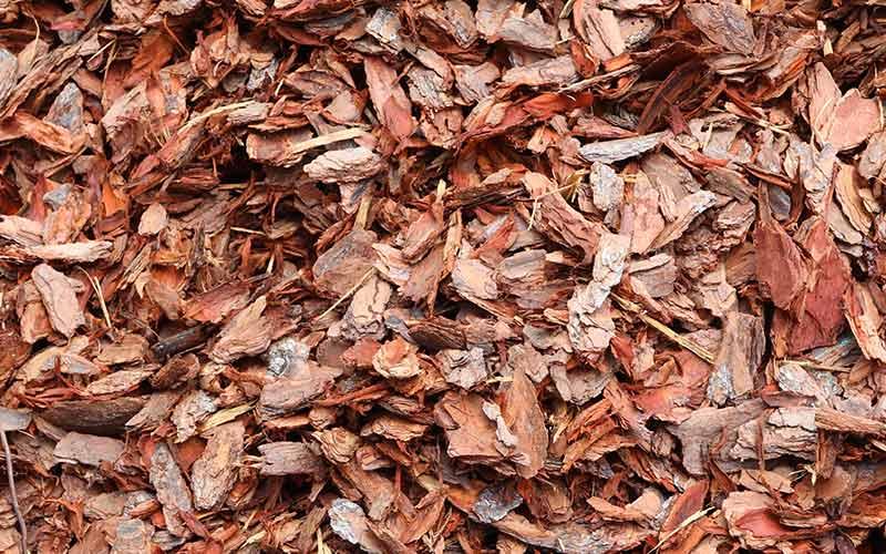 Pine Bark Large