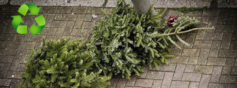 Great Ways to Recycle Christmas Trees